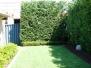 29 Pearse Street - Garden Maintenance