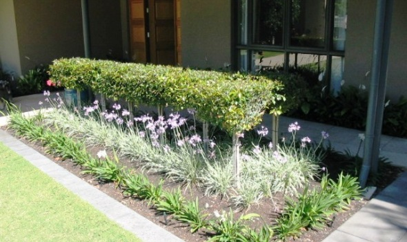 Peter Butler at 70 Philip Street – Garden Design and Landscaping