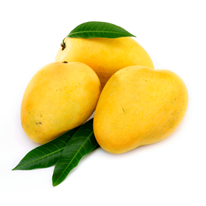 Mangoes – The King of the Fruits